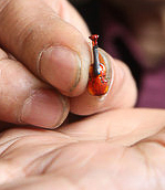 "Play ""Hearts and Flowers"" on the world's smallest violin"