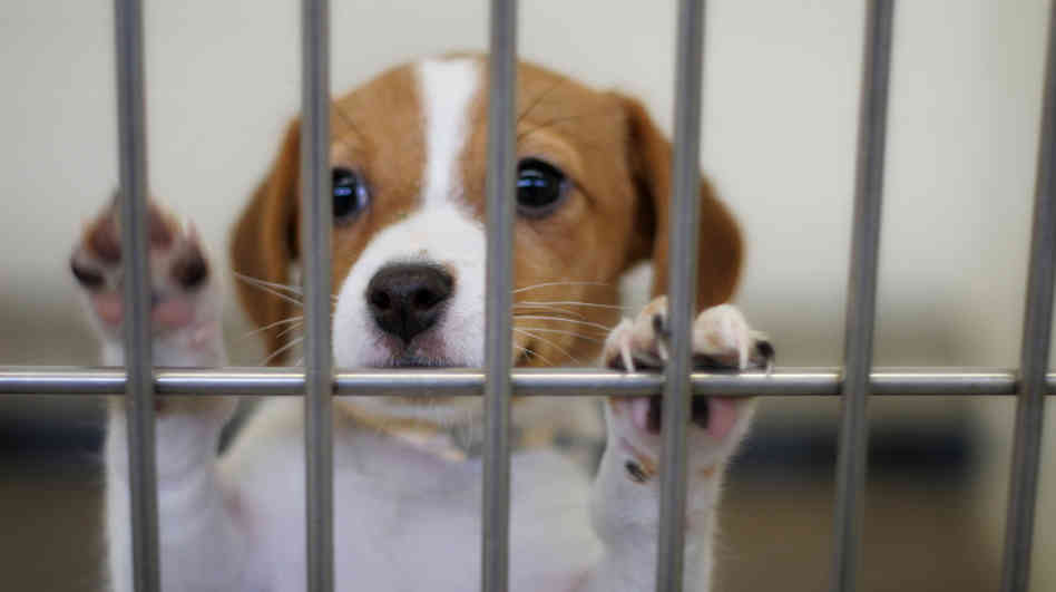 puppy in shelter